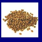 Ololiuqui (Rivea corymbosa) 20 seeds
