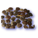 <strong>Yopo seeds 10g</strong>
