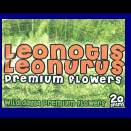 Lejonöra (leonotis leonurus) 20g